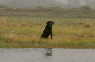 retriever-training-grounds-135